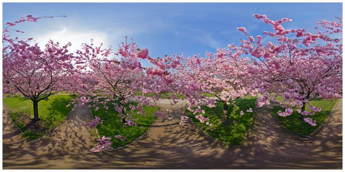 fruehling fredenbaum