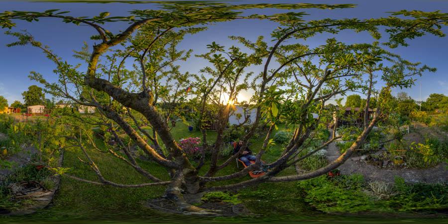 hannas-pflaumenbaum