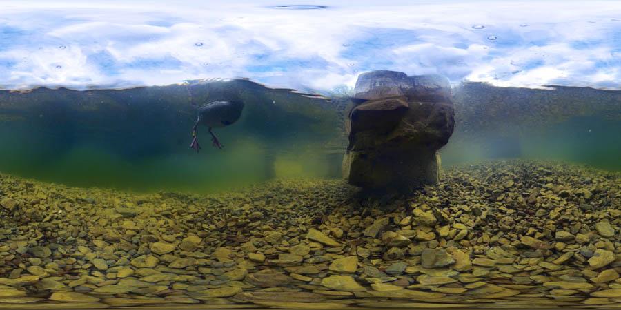 phoenixsee-unterwasserpanorama
