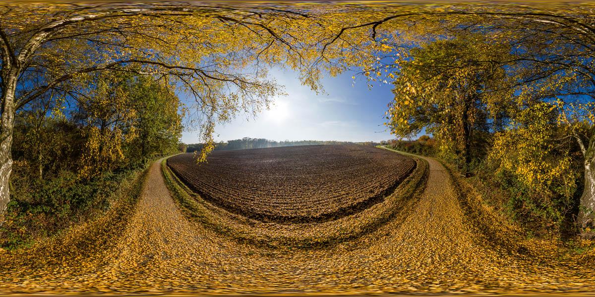 360 Grad Panorama unter einer herbstlich gelb leutenden Birke.