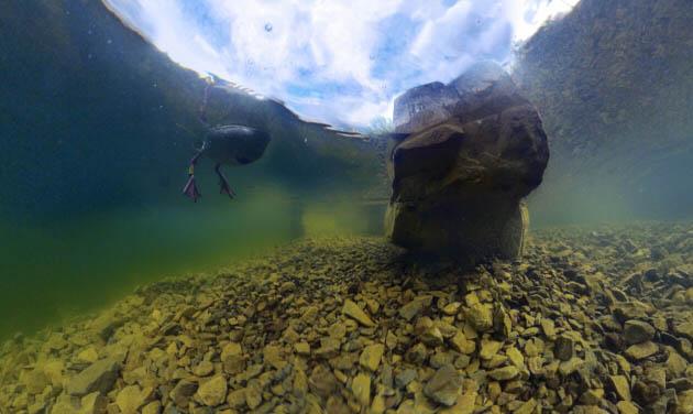 phoenixsee-unterwasserpano