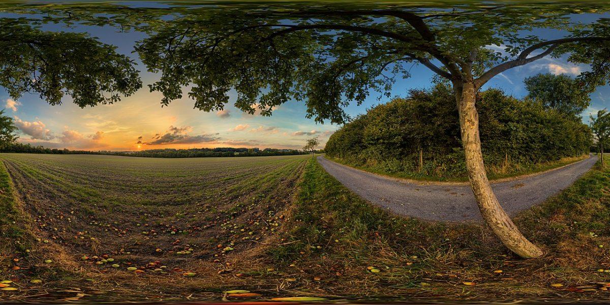 360° Panorama unter einem Apfelbaum im Sonnenuntergang